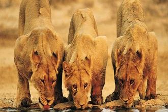 Nómadas, Samburus y Masais